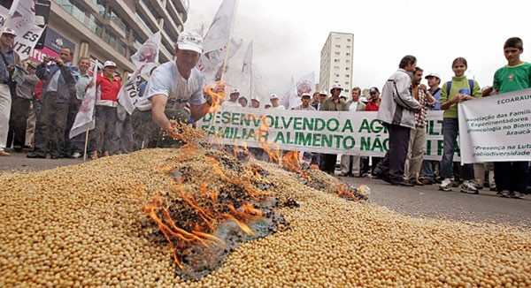 Brazil About to Refuse ALL Imports of U.S.- Grown Genetically-Modified Crops